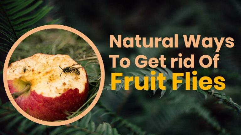 8 Natural Ways to Get rid of Fruit Flies [Homemade Fruit Fly Spray]